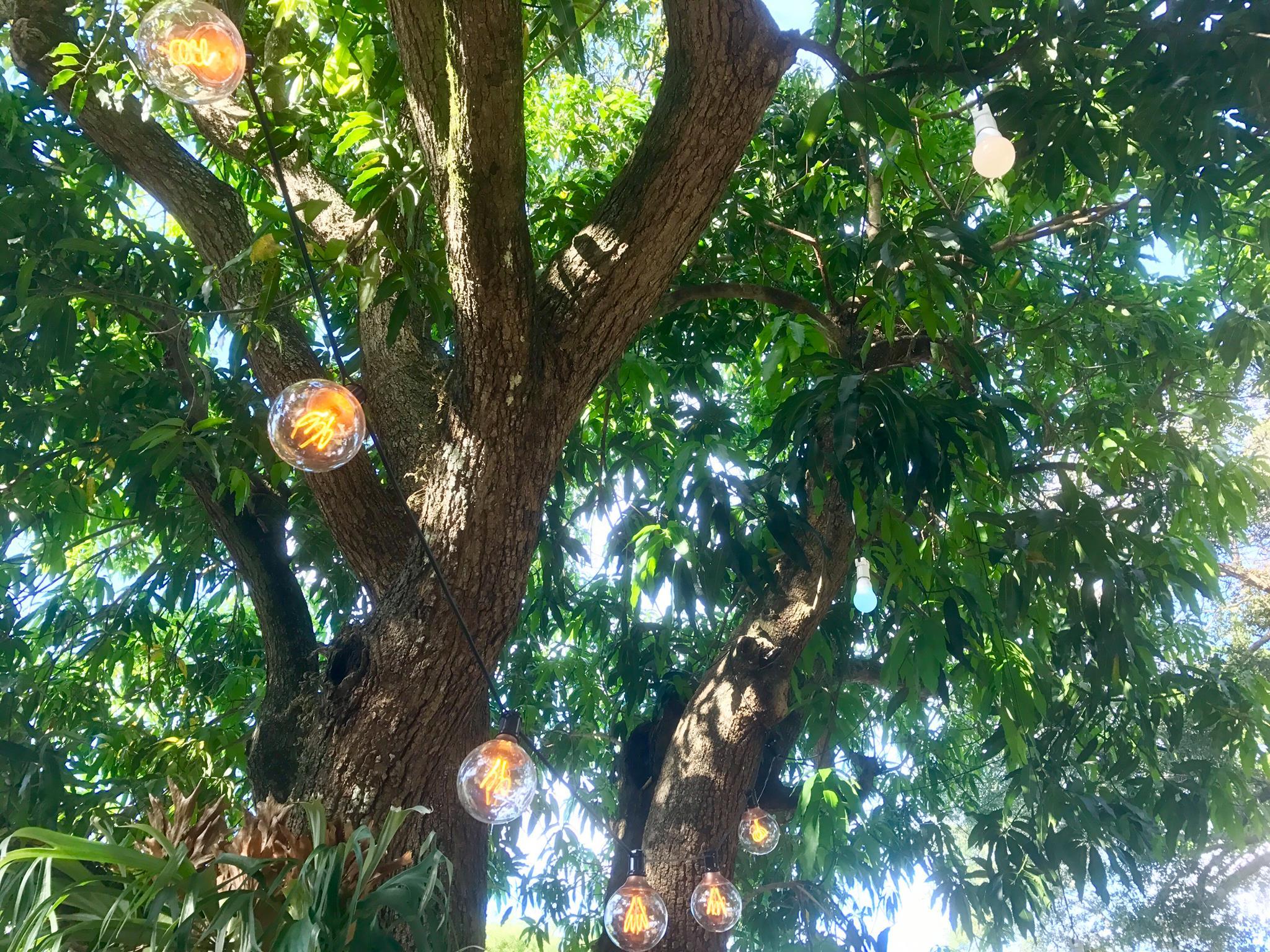 Lighting, string lights, backyard bash, near Miami Shores, FL